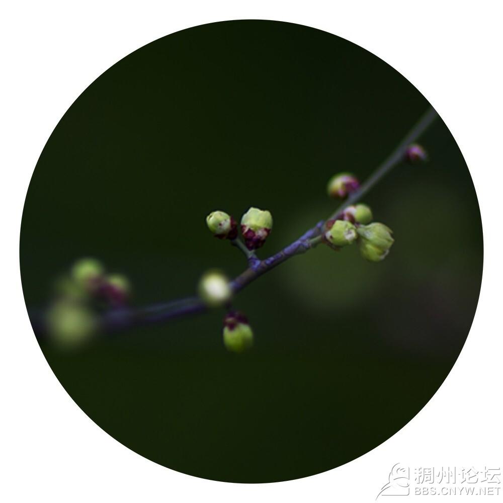 微信图片8.jpg