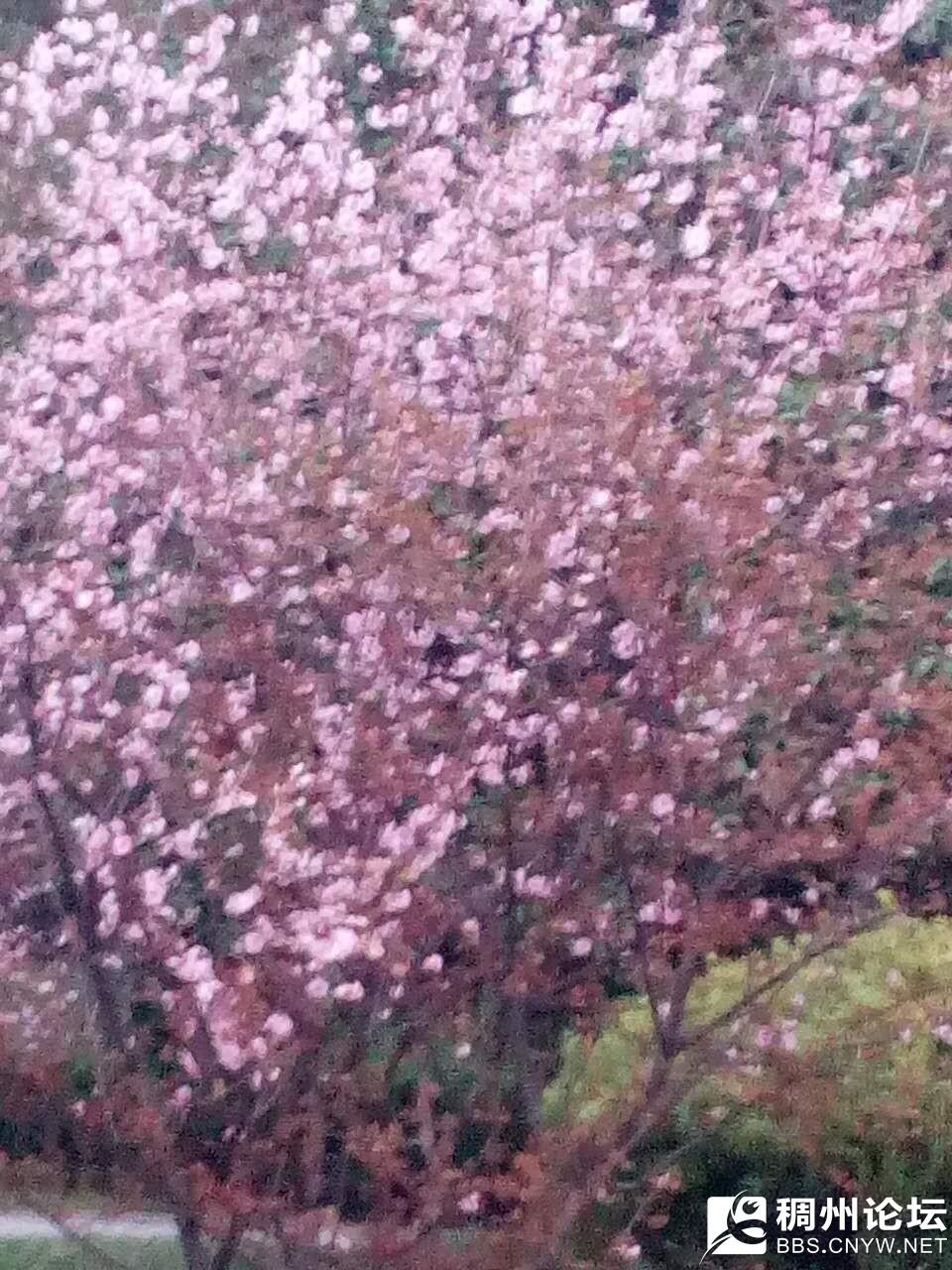粉色花.jpg