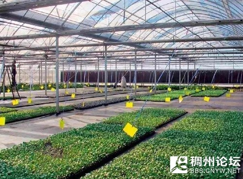 农业1.jpg