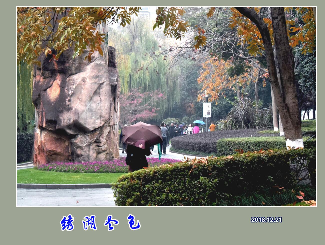 DSC_6215绣湖冬色 2.jpg