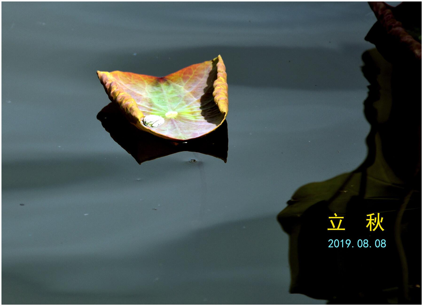 DSC_3621立秋.jpg
