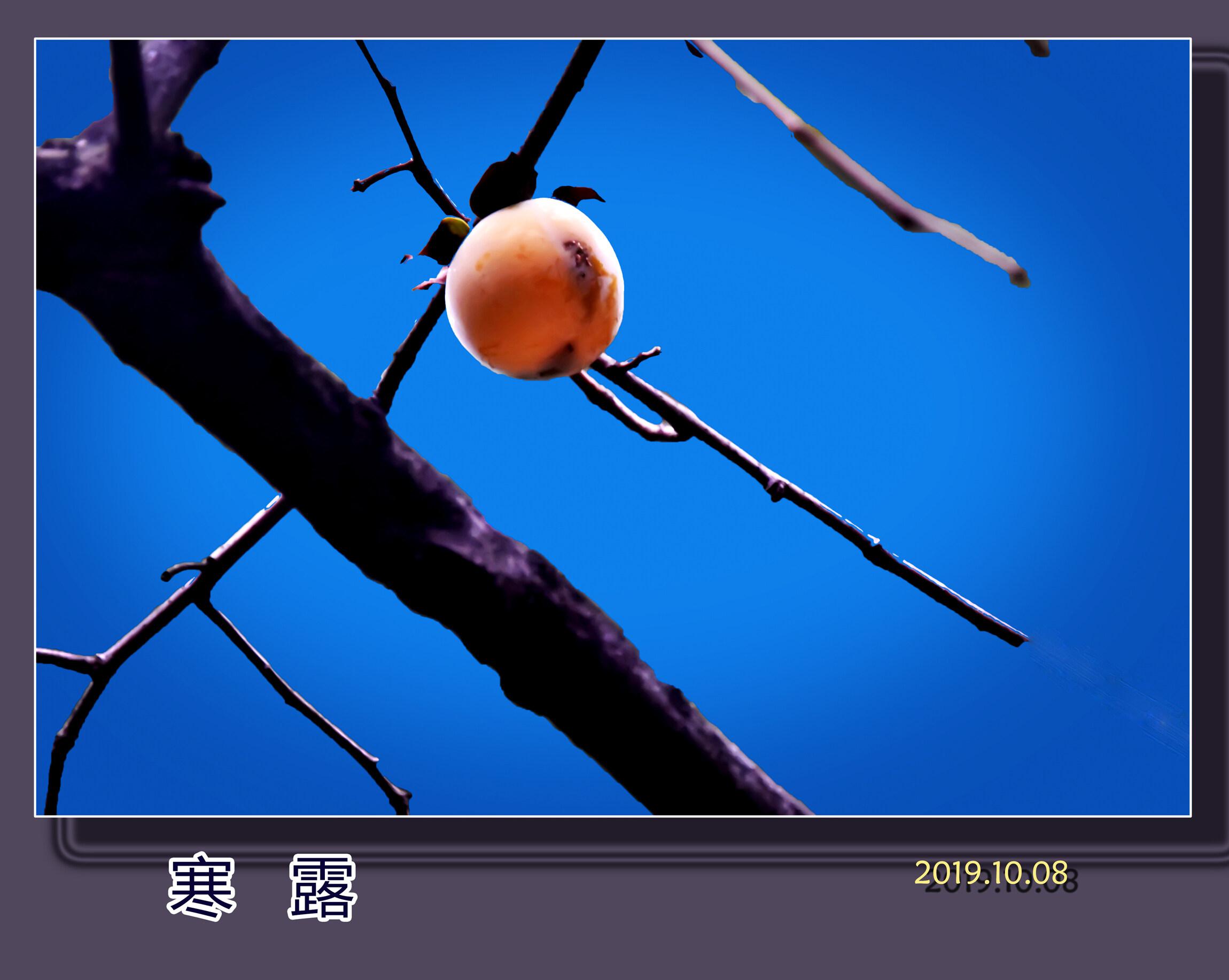 DSC_8349寒露1.jpg 2.jpg