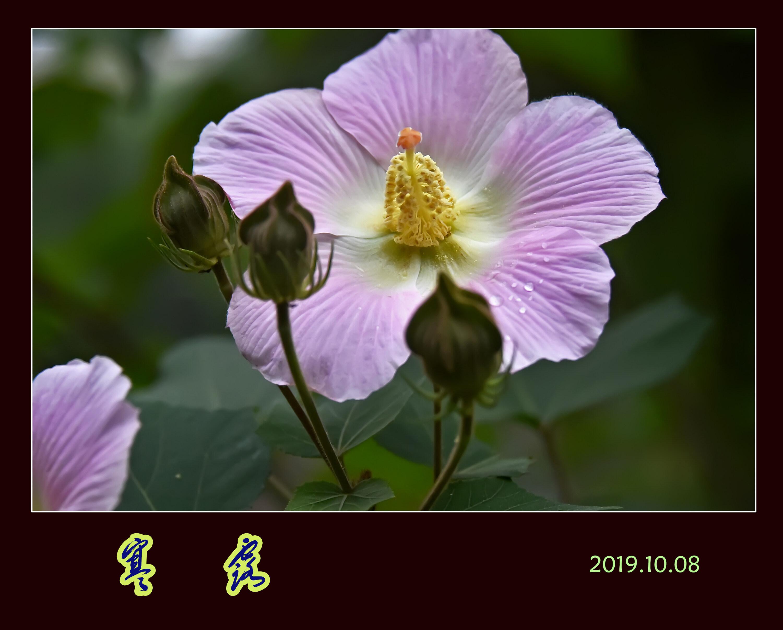 DSC_8393寒露5 2.jpg