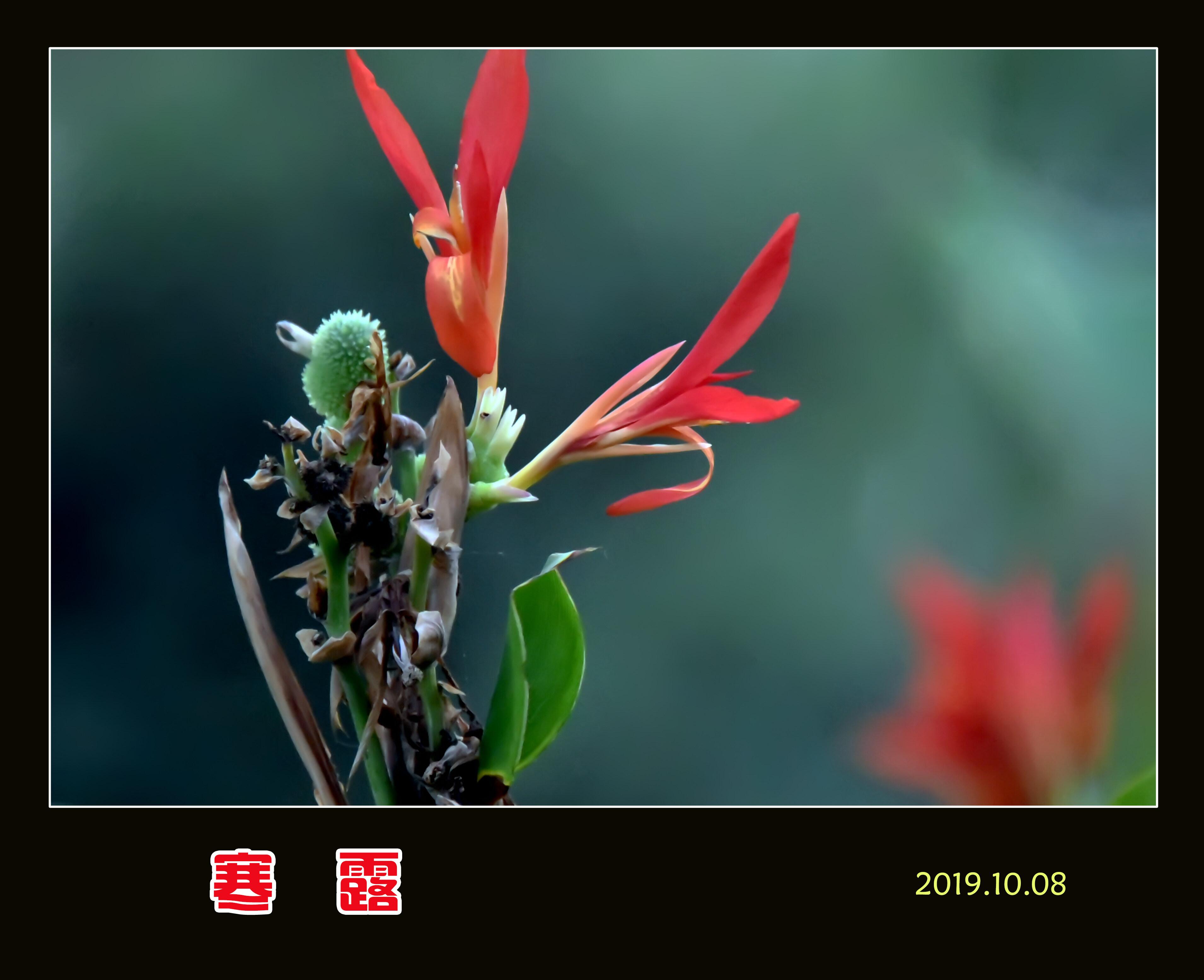 DSC_8473寒露8.jpg