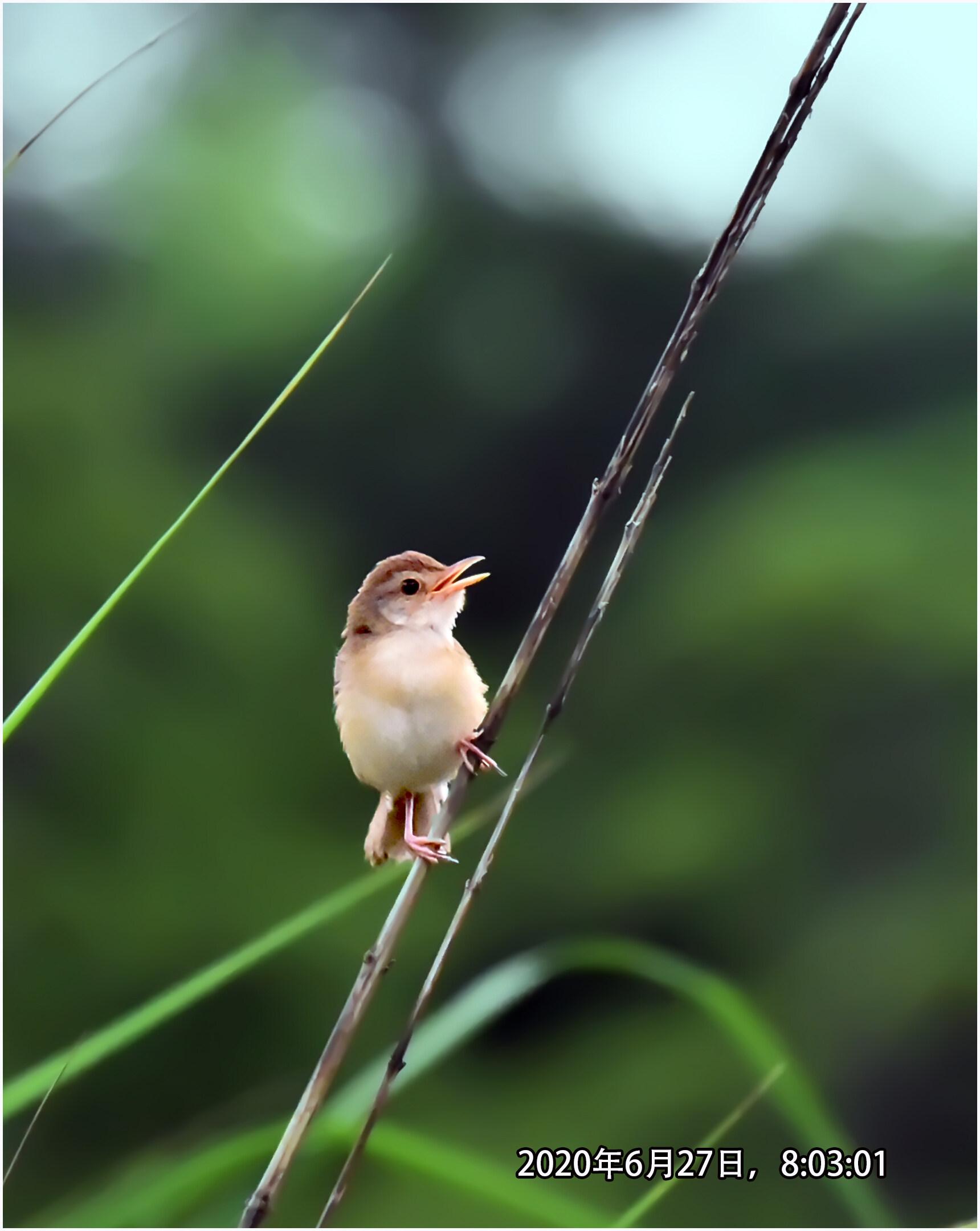 DSC_1029《小小鸟》8.jpg